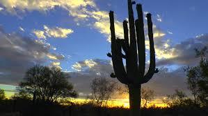 time lapse setting sun glows multi armed saguaro cactus
