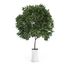 small tree in white pot 3d model from cgaxis