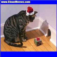 Cat Trap Meme - santa trap cat clean memes the best the most online