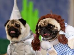 Funny Dog Costumes Halloween Wizard Oz Dog Costumes Pet Costumes Dog Halloween Costumes