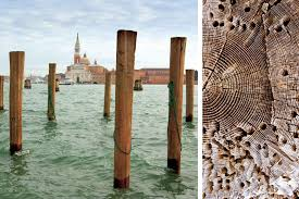 Wood For Furniture Edition Lignatur Edition Lignatur