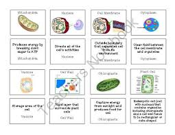 all worksheets cells and their organelles worksheet free