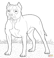 fresh pitbull coloring pages 47 for your free colouring pages with