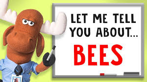5 facts about bees explore awesome activities facts
