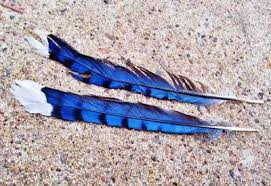 what does a feather symbolize feather symbolism feather signs