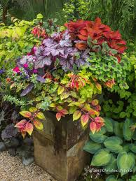 Ideas For Container Gardens Creative Of Design For Potted Plants For Shade Ideas Container