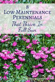 10 easy care plants for full sun perennials 8 low maintenance plants that thrive in the