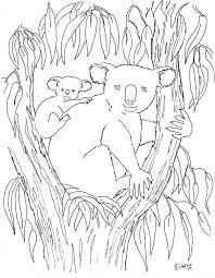 koala bear coloring page natural coloring books impressive koala bear coloring pages cool