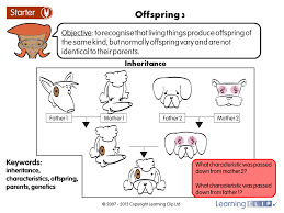 Science Worksheet Offspring 3 A Year 6 Science Worksheet