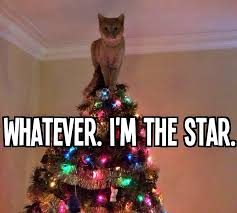 Christmas Cat Memes - christmas hilarious christmas tree and cat
