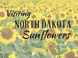 Flowers In Bismarck Nd - visiting north dakota sunflowers