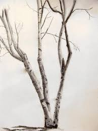 collection of 25 tribal style birch tree