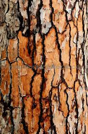 15 best texture images on textures patterns tree bark