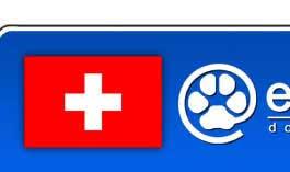 bichon frise z hter schweiz switzerland dog breeders and kennels eurobreeder com