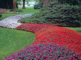 71 best flowers impatiens images on pinterest flowers