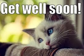 Soon Cat Meme - get well soon cat cat lovers