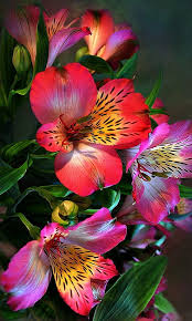 awesome looking flowers best 25 flowers ideas on pinterest pretty flowers flower