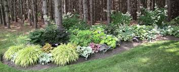 Shady Backyard Ideas Shade Garden Ideas Give A Way To Make A Shady Garden With Full Of