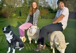 ram raid two sized ornamental sheep stolen from garden in