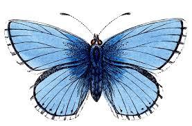 clip art free butterflies 35 86 clip art free butterflies