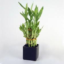 Plant For Bedroom Feng Shui Plants For Harmony And Positive Energy In The Living