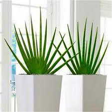 beautiful modern indoor plants gallery amazing design ideas