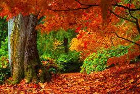 imagenes de otoño para fondo de escritorio fondo pantalla campo en otoño