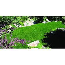 Blue Ribbon Landscaping by Amazon Com Kentucky Bluegrass Seed Blue Ribbon Blend Patio