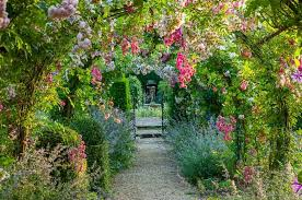 Fragrant Climbing Plant - add romance to your arbors and pergolas with fragrant rambling roses