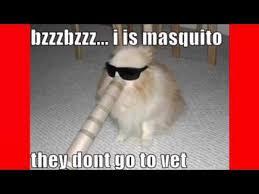 Top Ten Funny Memes - top 10 funny dog memes youtube