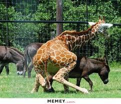 donkey memes funny donkey pictures memey com
