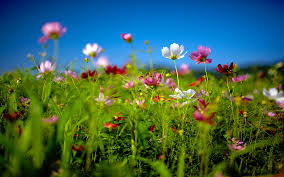 Flower Pictures Animals Backgrounds In High Quality Adorable Flower Field By