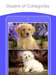 cute puppies 2 wallpapers cute puppy wallpapers hd backgrounds on the app store
