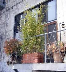 small garden idea use bamboo for privacy apartment therapy