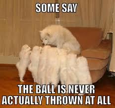 Ermahgerd Animal Memes - animal memes ermahgerd images