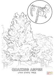 utah state tree coloring page free printable coloring pages