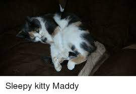 Sleepy Kitty Meme - kitty and kitty meme on sizzle