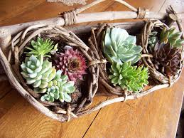 i love my garden new succulent container