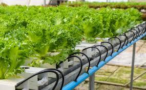 hydroponics faq sylvane