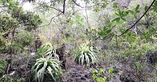 Tropical Dry Forest Animals And Plants - dry tropical forests in the caribbean and latin america under