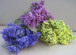 statice flowers driedflowers htm