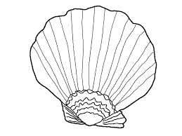 seashell coloring page free printable seashell coloring pages for