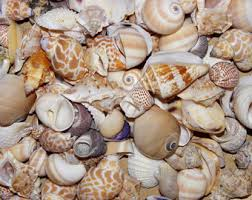 assorted seashells 2 bottle of tiny seashells mix shells seashore nautical