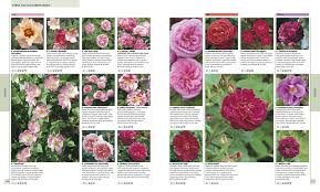 rhs encyclopedia of plants and flowers amazon co uk christopher
