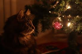 cat christmas christmas cat by whatskunk on deviantart