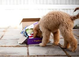 goldendoodle puppy treats puppy toys treats customized for your pup pupbox