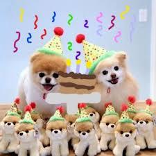 Pomeranian Meme - create meme spitz on holiday best gift spitz on holiday best