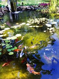 Aquascape Pond Pumps The Pond Outlet Blog Blog Archive Summer Pond Care U2013 Tips From