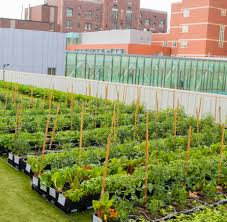 family doctors garden city bmc news boston medical center