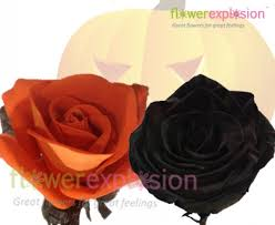 wholesale orange and black halloween tinted roses for parties